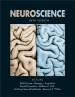 Neuroscience, 5th ed.