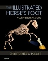 The Illustrated Horse's Foot : A Comprehensive Guide