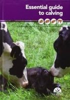 Essential Guide to Calving