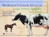 Spurgeon's Color Atlas of Large Animal Anatomy : The Essentials
