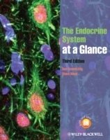 Endocrine System at Glance