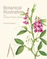 Botanical Illustration from Chelsea Physic Garden - Bailes, ...